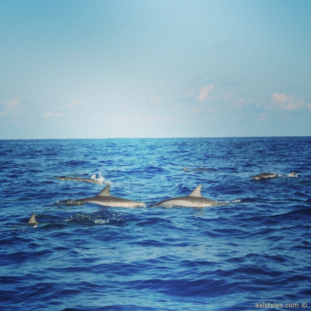 nager-avec-les-dauphins-ile-maurice-lux-resorts-le-morne-3